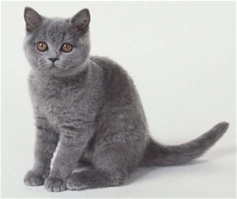 Informacion sobre el Gato | Informacion sobre animales