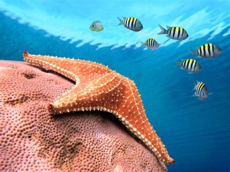 Información sobre la estrella de mar | Informacion sobre ...