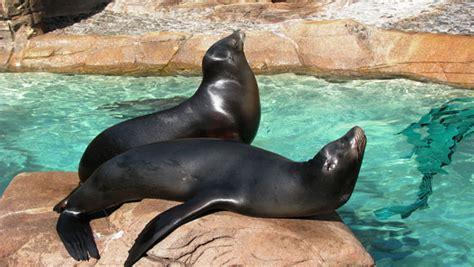 Información sobre la foca | Informacion sobre animales