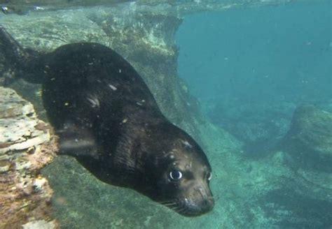 Información sobre la foca monje del mediterráneo ...