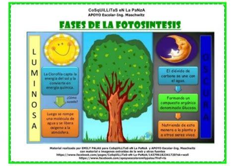 Información sobre la fotosíntesis y sus fases: Cuadros ...