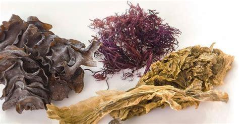 Información sobre las algas marinas: ¿Cómo deben ...