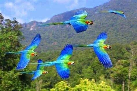Información sobre las aves   Informacion sobre animales