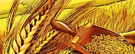 Información sobre las proteínas del trigo