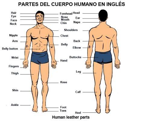 Ingles basico para poder viajar: Partes del cuerpo humano ...