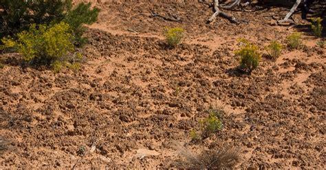 Intelligent Design in the Dirt | Evolution News