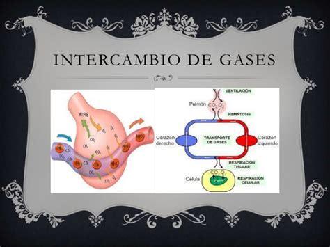 Intercambio de gases del sistema respiratorio