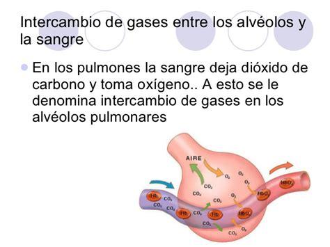 Intercambio de gases en los alvéolos