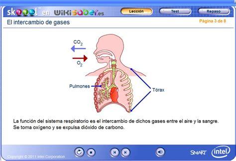 Intercambio de gases en los pulmones | Recurso educativo ...