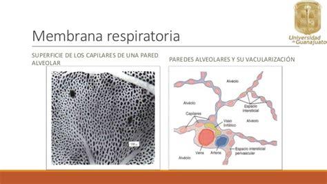 Intercambio gaseoso en los pulmones