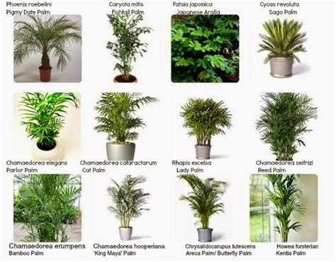 Interiorscaping Compendium: INDOOR PLANT IDENTIFICATION