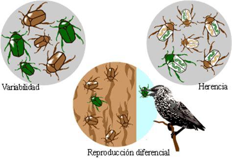 Introducción a la evolución: Los mecanismos de la evolución