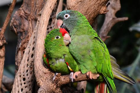 Introducción de especies exóticas: causas y consecuencias