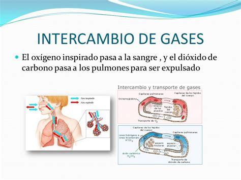 INTRODUCCIÓN INTERCAMBIO DE GASES Y VENTILACIÓN PULMONAR ...