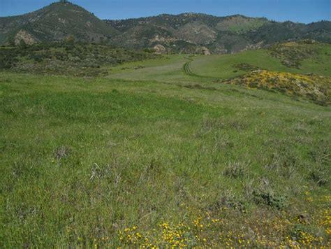 Invading species can extinguish native plants despite ...