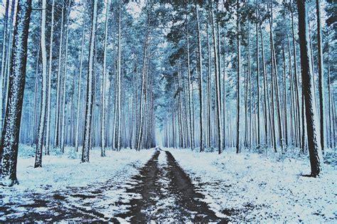 Invierno Bosque Nieve · Foto gratis en Pixabay