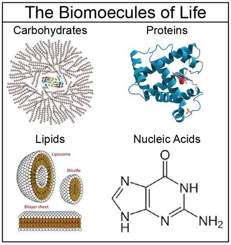 Jamie Scott / Unit 4: Biomolecules