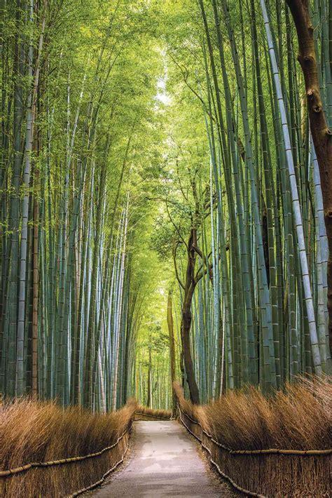 Japón: bajo el embrujo del bosque de bambú