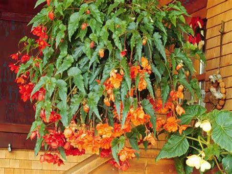 Jardim da Terra: DICA DO DIA: 17 Plantas para montar um ...