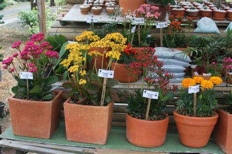 Jardín Botánico :: Adquiere Nuestras Plantas