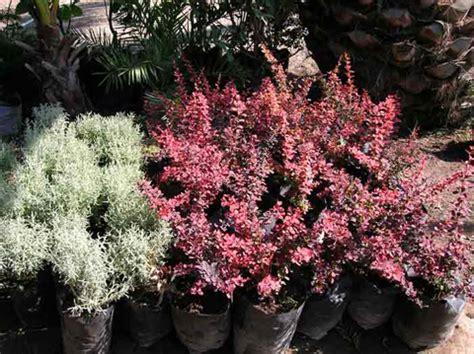 Jardín del Parque / 4 Arbustos-ornamentales