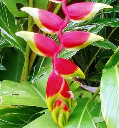 Jardín en L con plantas tropicales: se agradecen sugerencias
