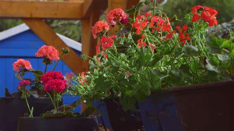 Jardines verticales en balcones   Blog de Hogarmania