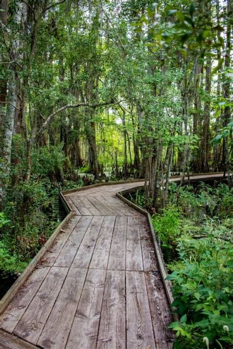 Jean Lafitte National Park a New Orleans Swamp | New ...
