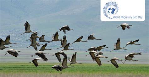 Journée mondiale des oiseaux migrateurs 2016   10 mai | CMS