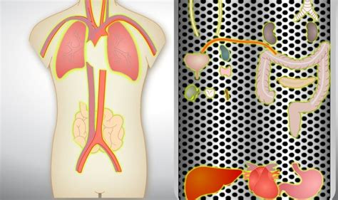 Juego Partes del Cuerpo Humano en Ingles. Organos | Organs ...