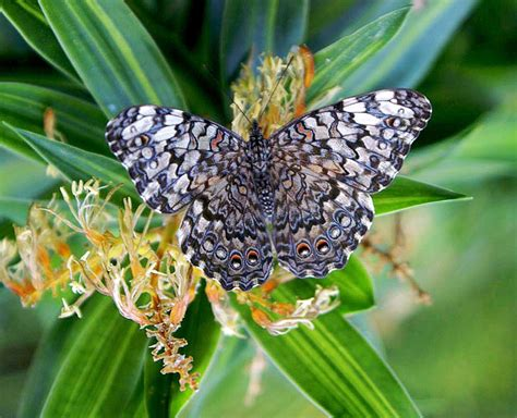 Juegospx - Mariposas