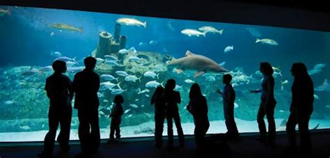 June Is National Zoo and Aquarium Month