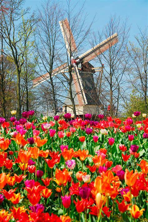 Keukenhof, el jardín más colorido de Europa en primavera ...