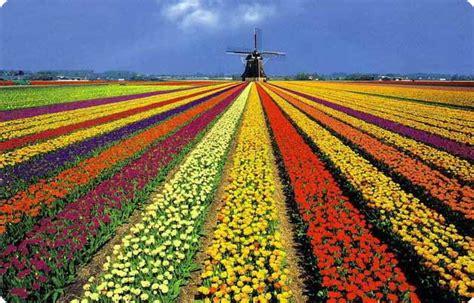 Keukenhof, o maior jardim de flores do mundo!