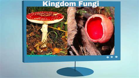 Kingdom Fungi Characteristics - YouTube