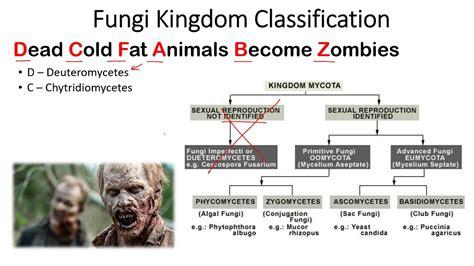 Kingdom Fungi classification trick to remember   YouTube