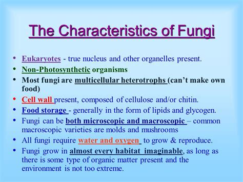 Kingdom Fungi. - ppt video online download
