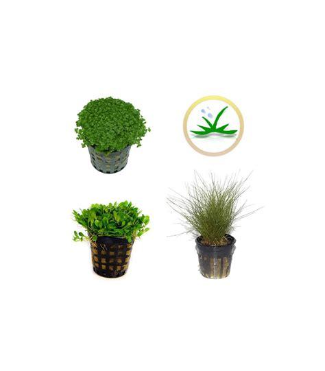 Kit Plantas de acuario - tapizantes