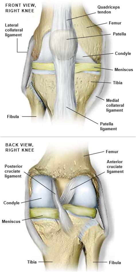 Knee Anatomy Diagram Detailed, Knee, Get Free Image About ...