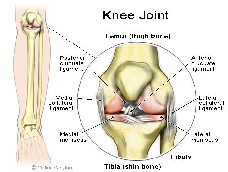 Knee Injuries and Osteoarthritis