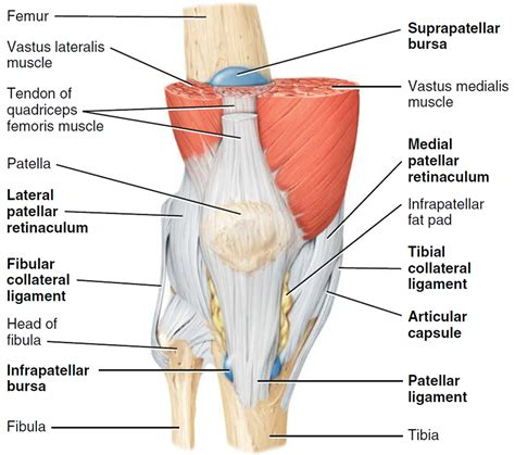 Knee Pain - Causes, Exercises, Remedies, Medication ...
