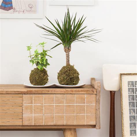 Kokedama, la alternativa japonesa para decorar tu casa con ...