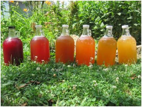 Kombucha, a bebida da saúde!   Espaço Flor das Aguas