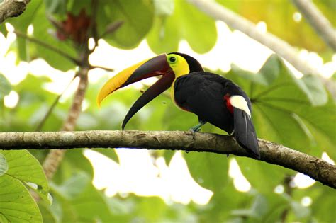 Kostenlose foto : Baum, Vogel, Schnabel, tropisch, Fauna ...