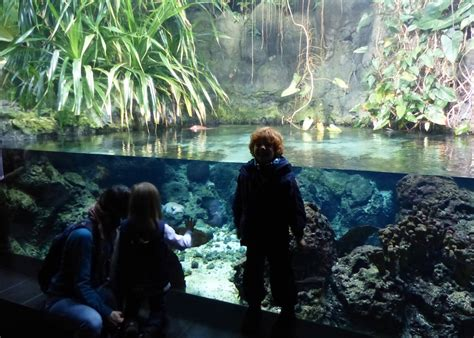 Kurzt®ipp: Zoo und Aquarium Berlin mit Kindern ...