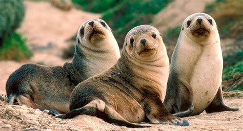 L10. Comportamiento inicial de crías de foca grises en el ...