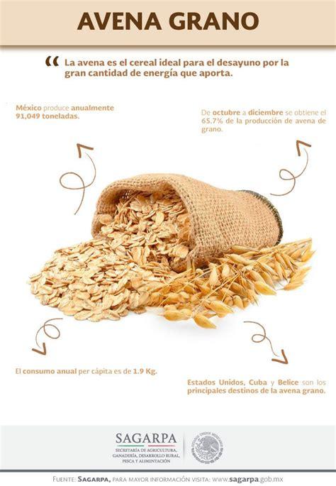 La avena es el cereal ideal para el desayuno por la gran ...
