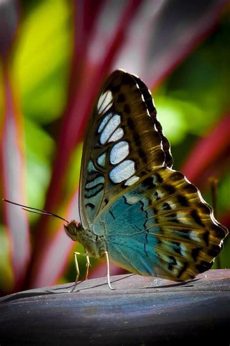 La beauté de la planète   jolies photos de papillons ...