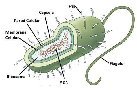 La Biología como Ciencia y La Célula.