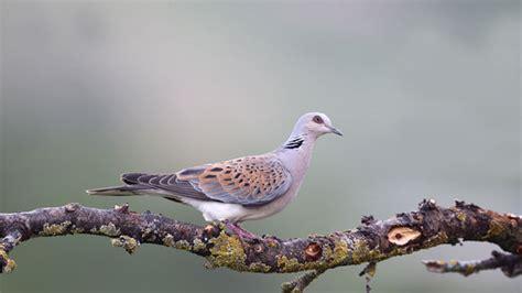 La caza de 12 millones de aves al año y la degradación ...